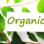 Organic — Stock Photo #3634994