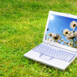 Stock Photo: Flowers and laptop