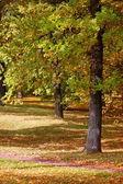Bosque y jardín con hojas doradas en otoño — Foto de Stock