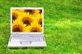 Bloemen en laptop — Stockfoto