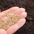 Hand sowing seed - Foto Stock