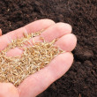 Hand sowing seed - Foto de Stock  