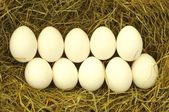 Blank egg in hey — Stock Photo