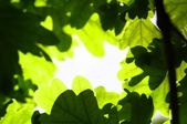 Leaves — Stockfoto