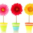 Funny flowers — Stock Photo