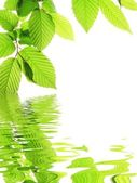 Green leave and water — Stock Photo