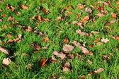 Gras textuur met bladeren in de herfst — Stockfoto