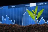 Growth — Stock Photo
