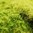 Green dosh in the forrest — Stock Photo