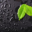 Leaf and black background — Stock Photo