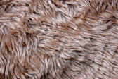 Pelt texture — Stock Photo