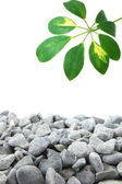 Stones and leaf — Stock Photo