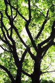 Arbres dans les bois — Photo