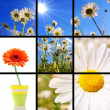 Flower collage — Stock Photo #3834111