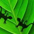 Green jungle leaf and gecko — Lizenzfreies Foto