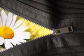 隠された花 — ストック写真