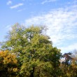 Fall in the park with green trees under blue sky — Stock Photo #3873582