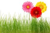 Flower and grass — Stock Photo