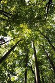 森の中の木 — ストック写真