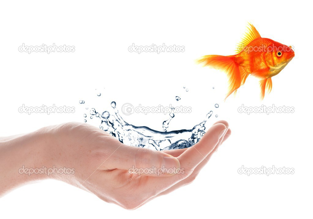 Freedom free flee or escape concept with goldfish and hand — Stock Photo #3871287