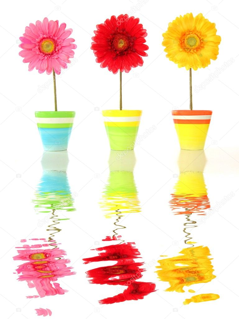 Summer or spa flowers with water reflection — Stock Photo #3876359
