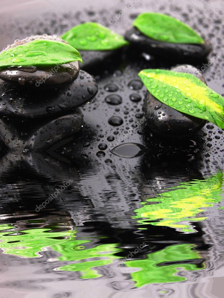 Spa or zen still life with water drops reflection and grean leaves  Stock Photo #3876377
