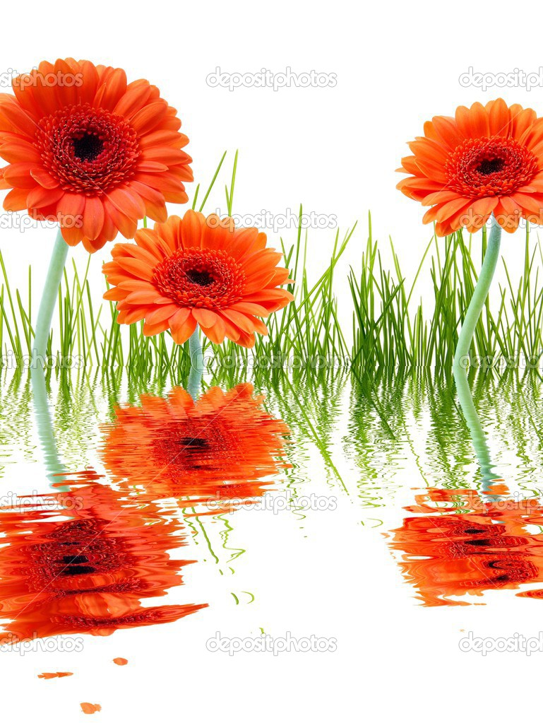 Summer or spa flowers with water reflection — Stock Photo #3876413