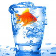 Goldfish — Stock Photo #3920116