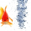 Goldfish — Stock Photo #3920137