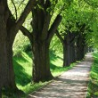 Summer tree alley - Stock Photo