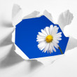 Flower behind hole in paper — Stock Photo