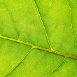 Structure and texture of green leaf — Stock Photo #3979149