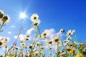 夏の草原の花 — ストック写真
