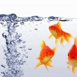 Goldfish — Stock Photo #3980033