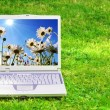 Flowers and laptop — Stock Photo