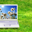 Flowers and laptop — Stock Photo #3980342