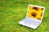 Blumen und laptop — Stockfoto