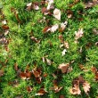 Grass texture with leaves in autumn - Stock Photo