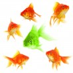 ������, ������: Goldfish