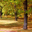 Forest and garden with golden leaves at fall - Stockfoto