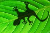 Gecko schaduw op blad — Stockfoto