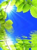 Green summer leaves — Stock Photo