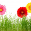 Stock Photo: Flower and grass
