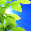 Leaf and blue sky - Stock Photo