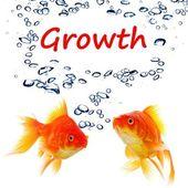 Growht — Stock Photo