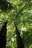 Bäume im wald — Stockfoto