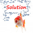 Solution — Stock Photo