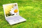Laptop and flower — Stock Photo