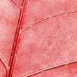 Abstract colored leaf texture — Stock Photo