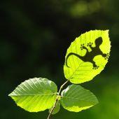 Green jungle leaf and gecko — Stock Photo